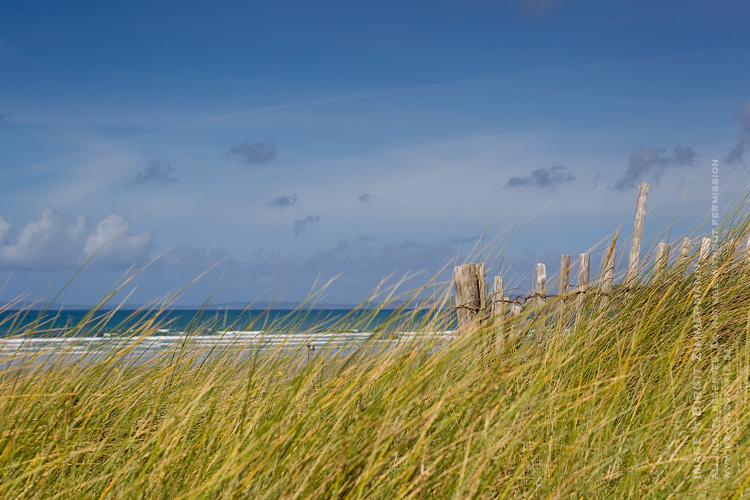 beach-reed-sea