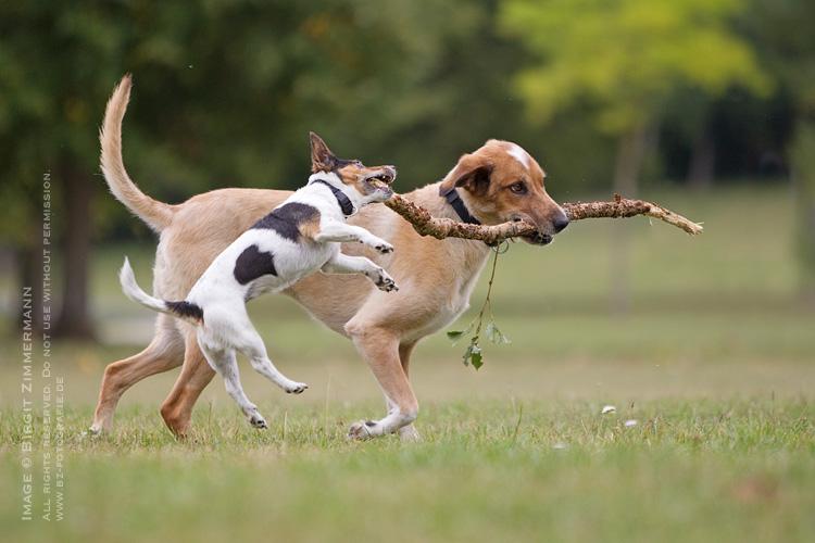 Foto von zwei spielenden Hunden