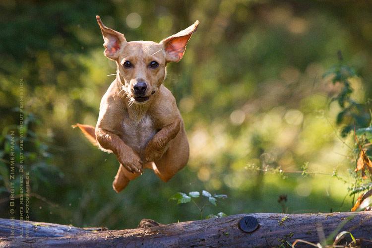 terrier-mix-sprung