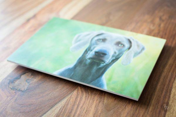 Hundefotograf Kunstdruck
