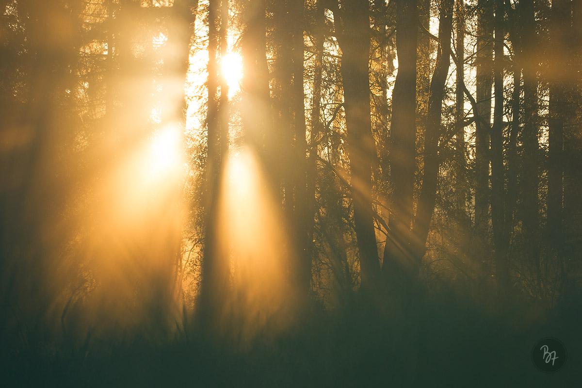 herbst-nebelwald-sonnenaufgang