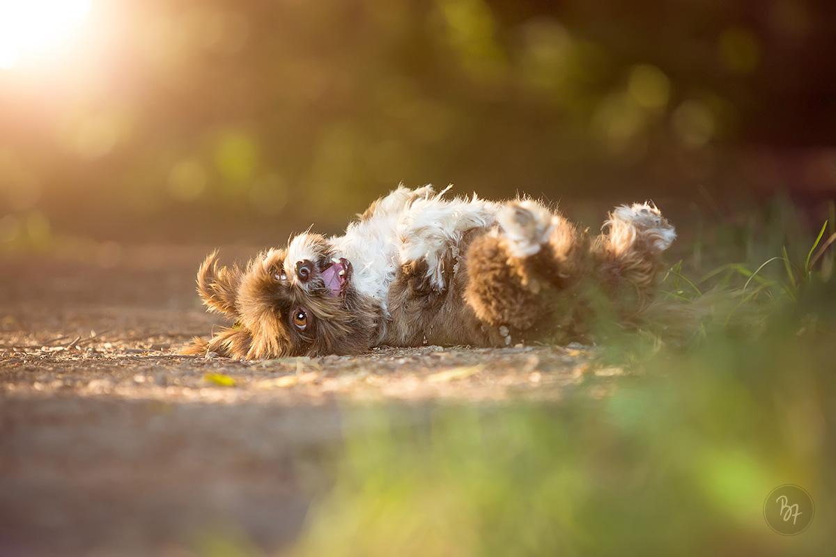 Hundefotos bei München - Alberner Moment