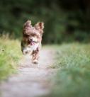Hundefotografie bei München: Rennender kleiner Mischling