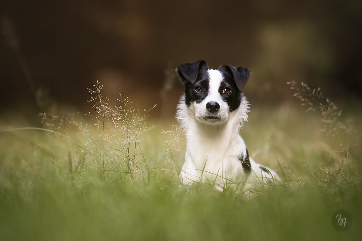 hundefoto-wald-muenchen
