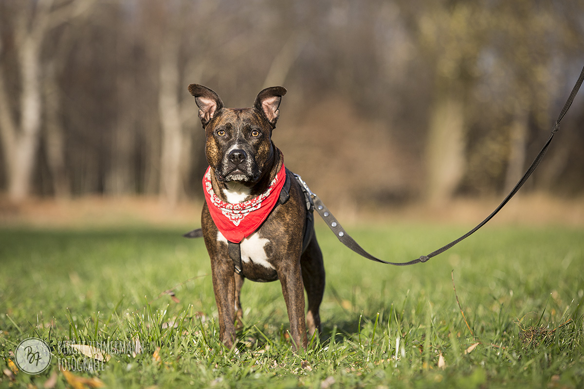 2015-11-15_hundeshootings-th-006