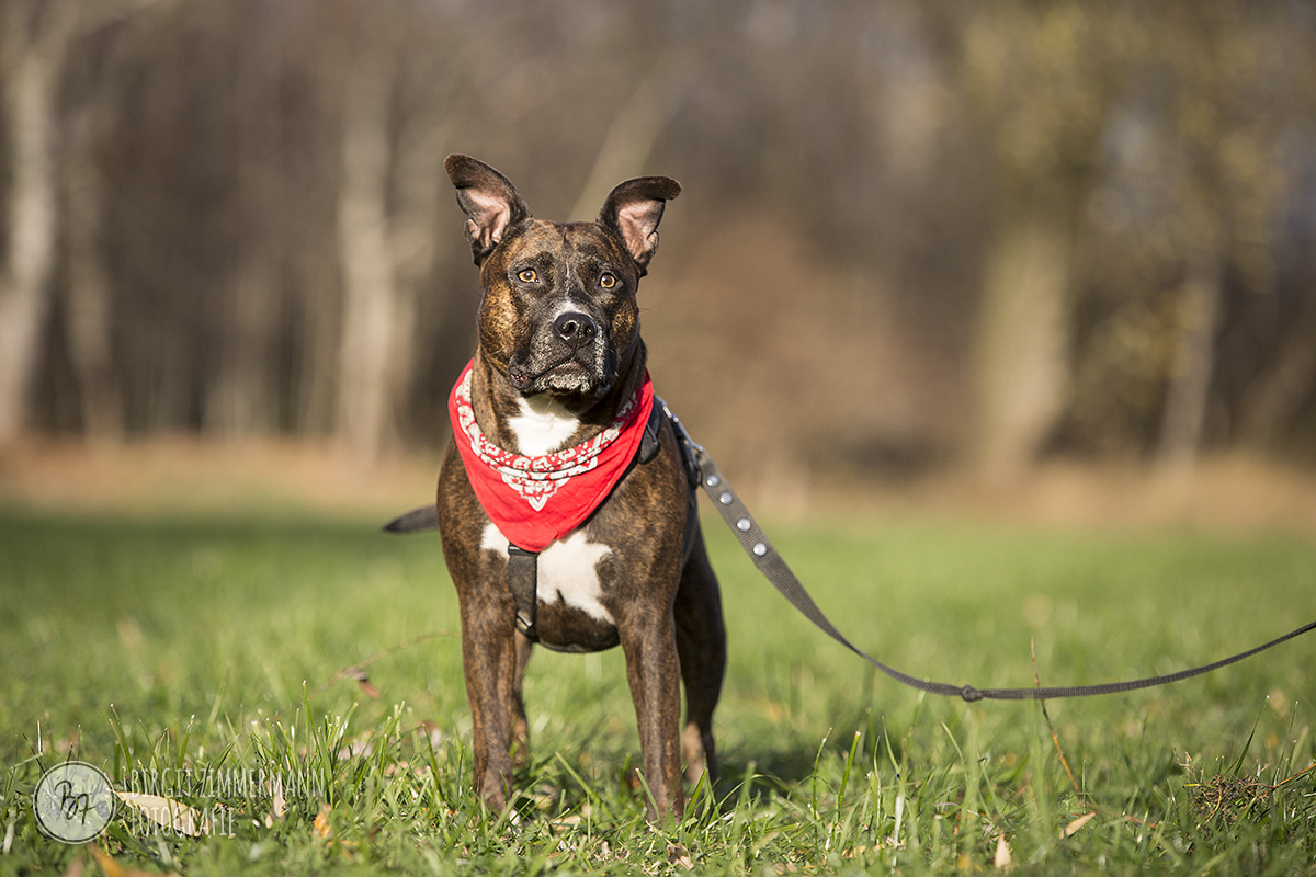 2015-11-15_hundeshootings-th-007