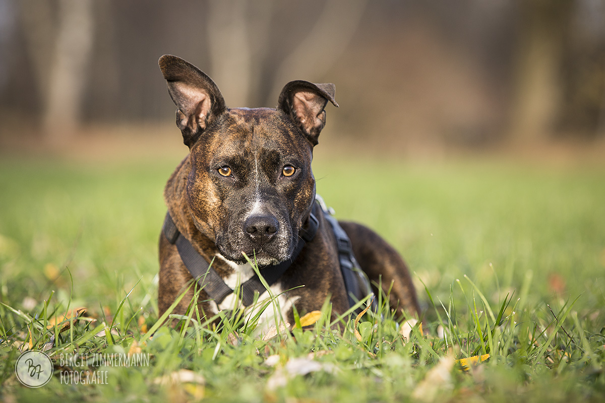 2015-11-15_hundeshootings-th-008