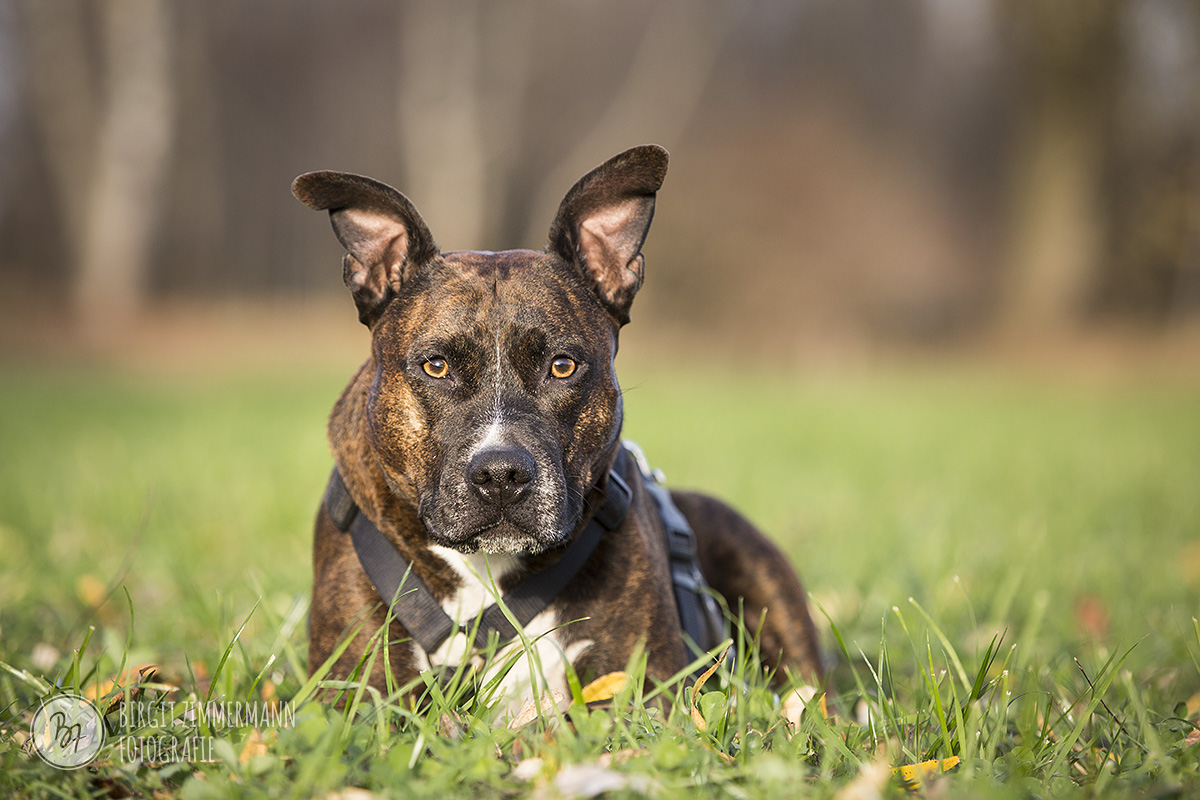 2015-11-15_hundeshootings-th-009