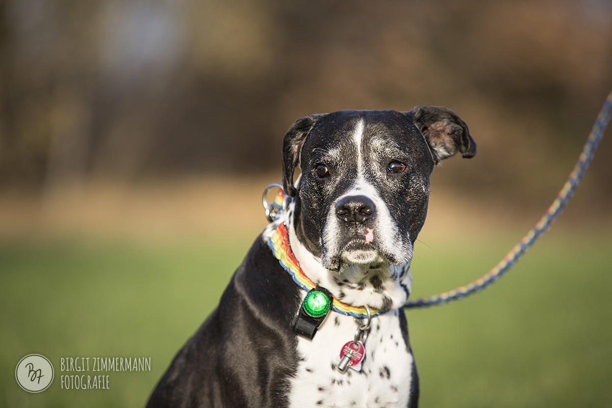 2015-11-15_hundeshootings-th-010