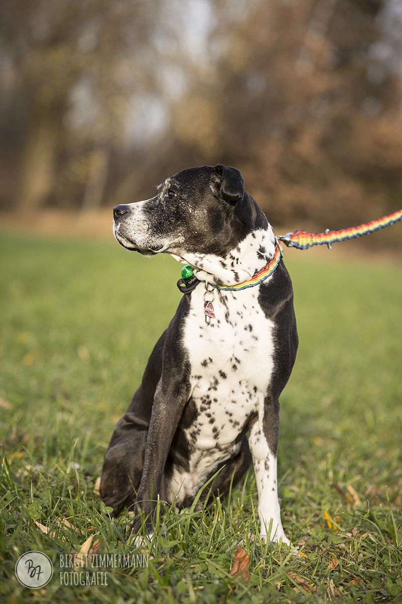 2015-11-15_hundeshootings-th-011