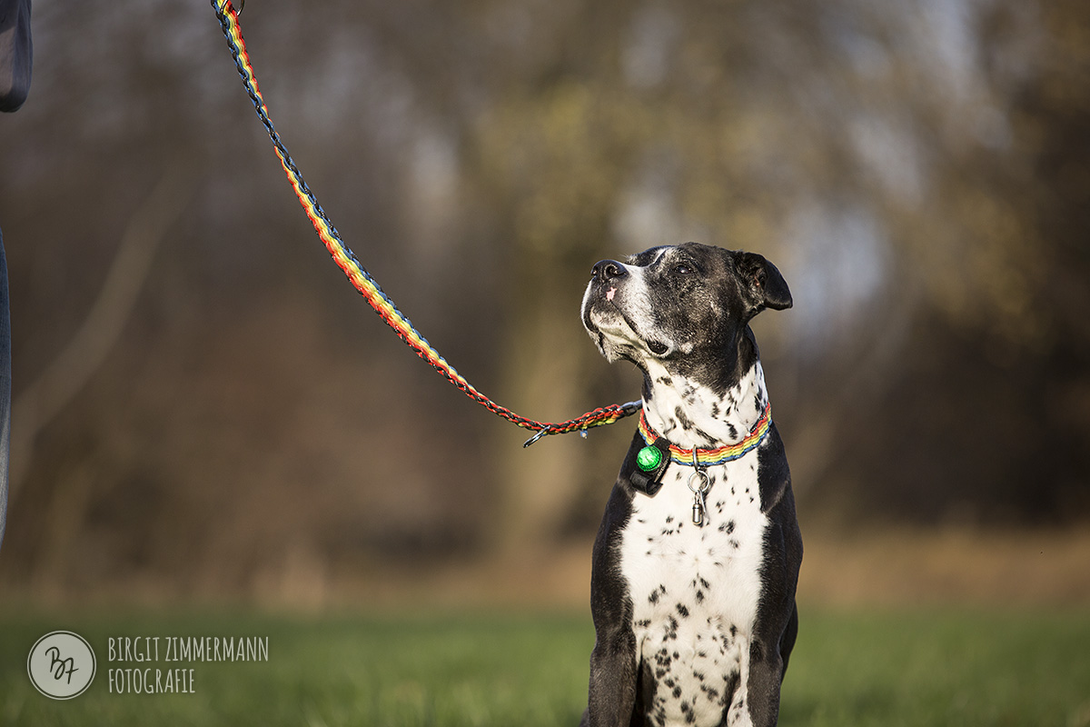 2015-11-15_hundeshootings-th-012