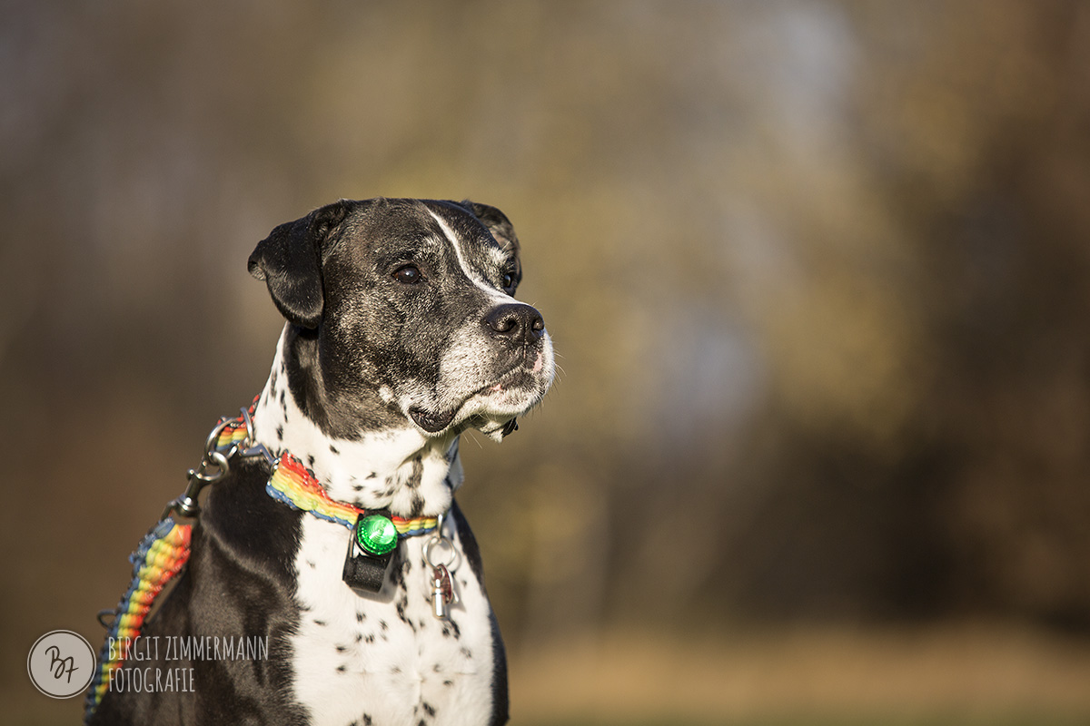 2015-11-15_hundeshootings-th-017