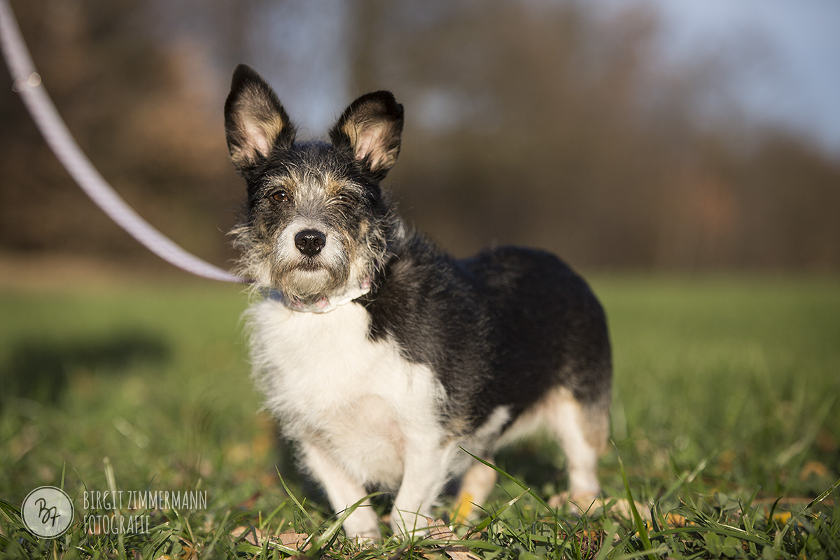 2015-11-15_hundeshootings-th-019