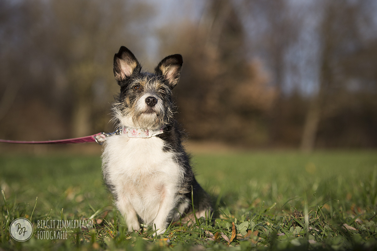 2015-11-15_hundeshootings-th-022