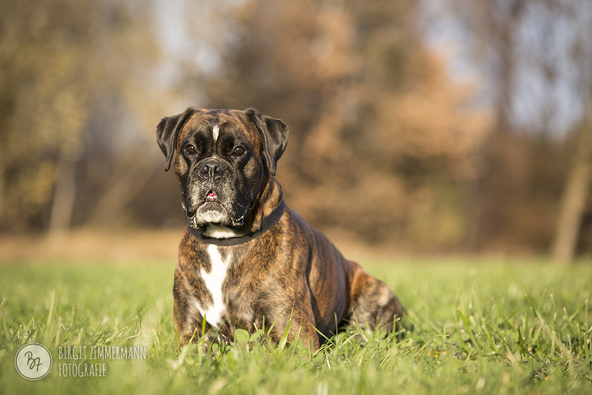 2015-11-15_hundeshootings-th-028