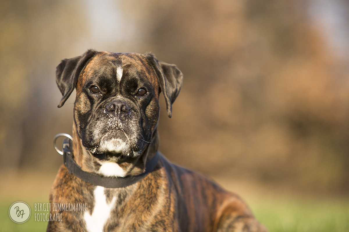 2015-11-15_hundeshootings-th-030