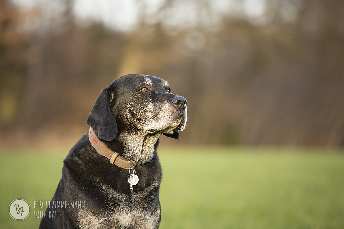 2015-11-15_hundeshootings-th-036