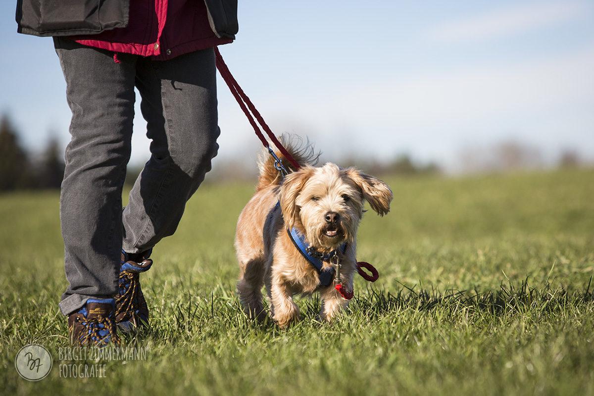 hunde-socialwalk-ostermuenchen-005
