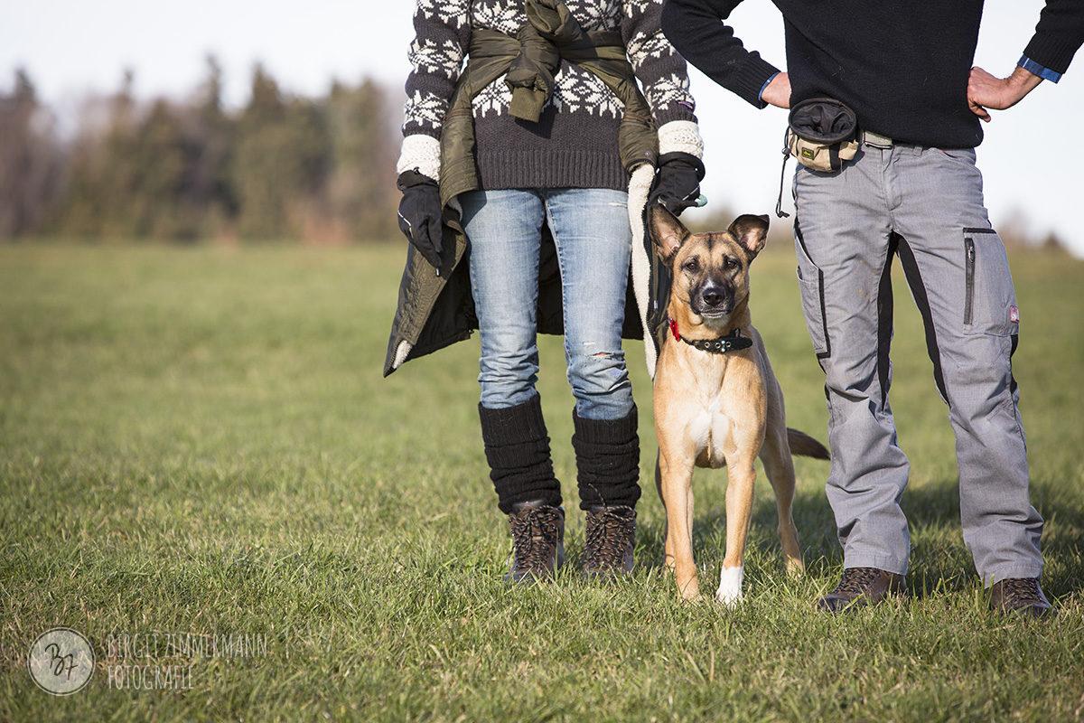 hunde-socialwalk-ostermuenchen-011
