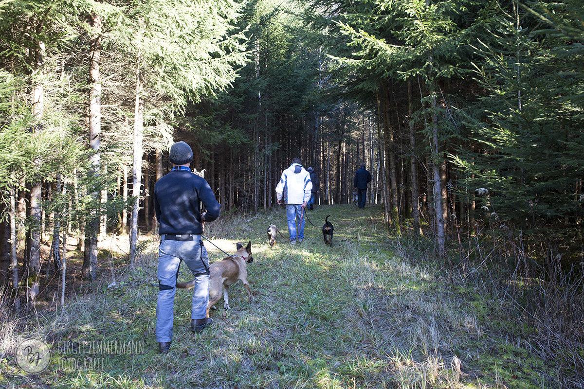 hunde-socialwalk-ostermuenchen-024
