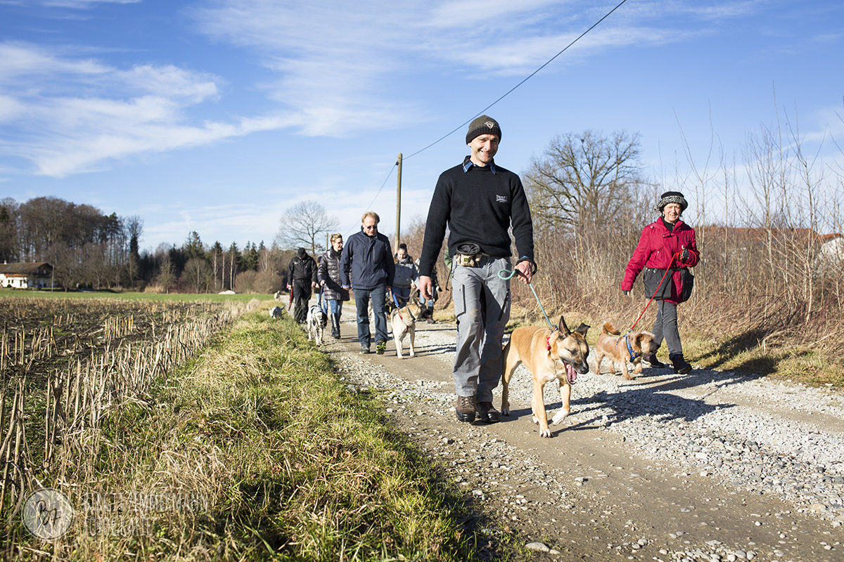 hunde-socialwalk-ostermuenchen-026