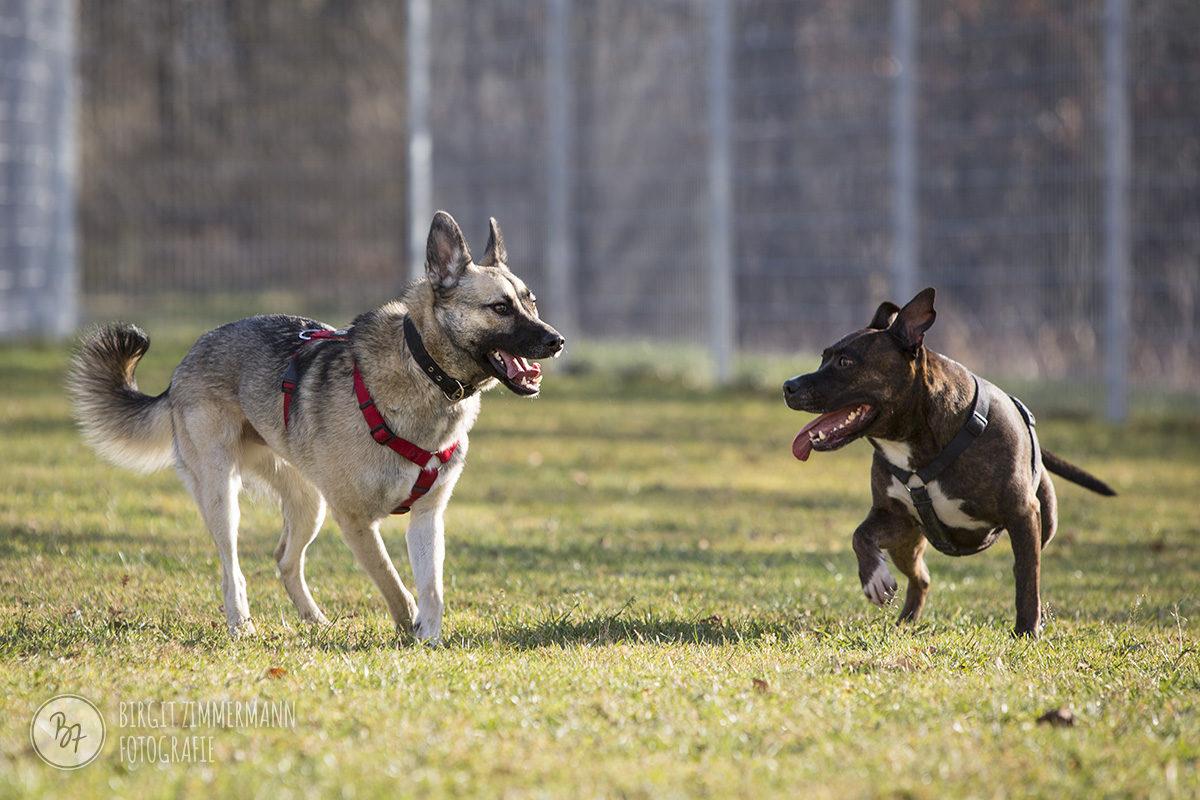 hunde-socialwalk-ostermuenchen-031