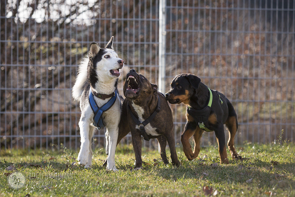 hunde-socialwalk-ostermuenchen-035