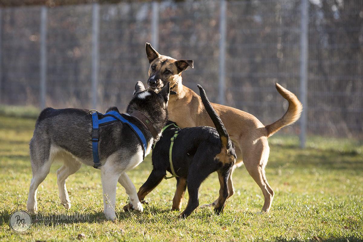 hunde-socialwalk-ostermuenchen-041