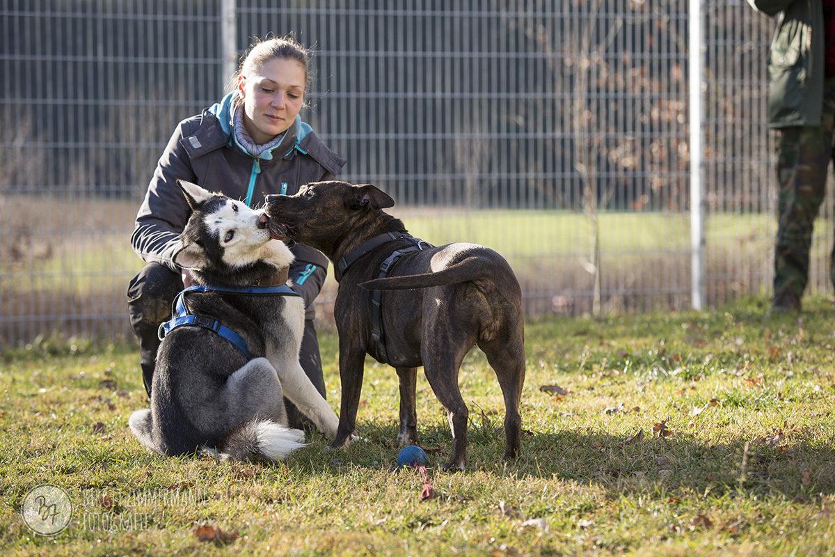 hunde-socialwalk-ostermuenchen-043