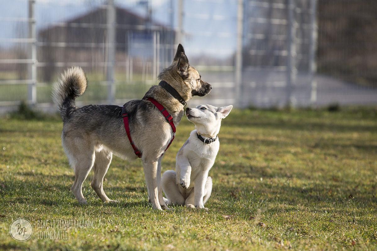 hunde-socialwalk-ostermuenchen-045