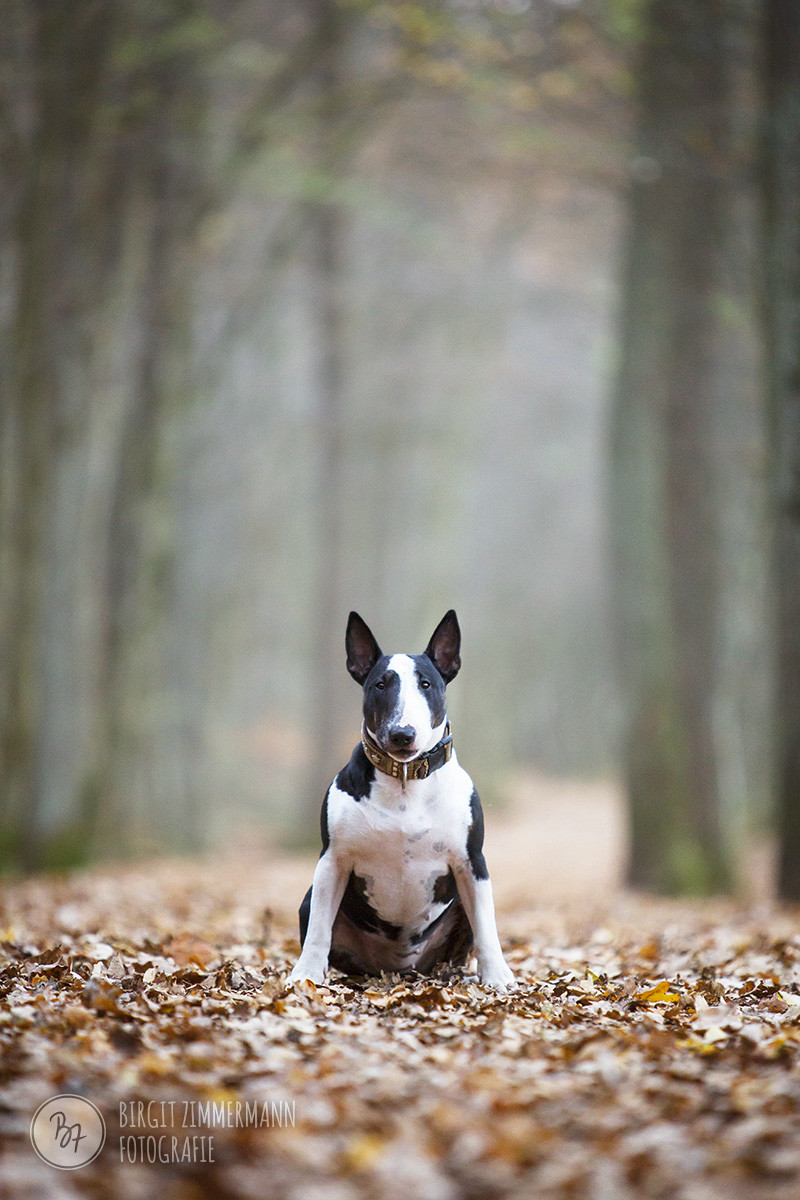 hundefotos-bike-muenchen-007