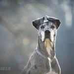 hundefotos-isar-muenchen-november-017