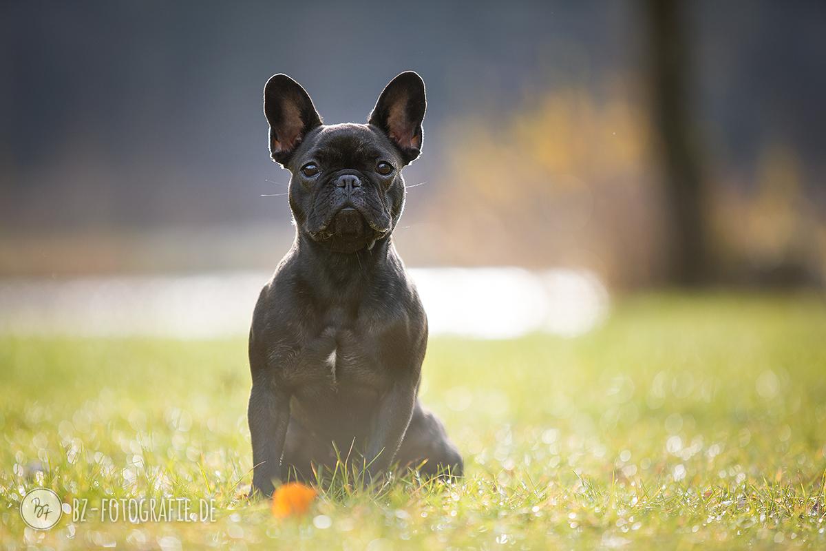 hundefotos-isar-muenchen-november-018