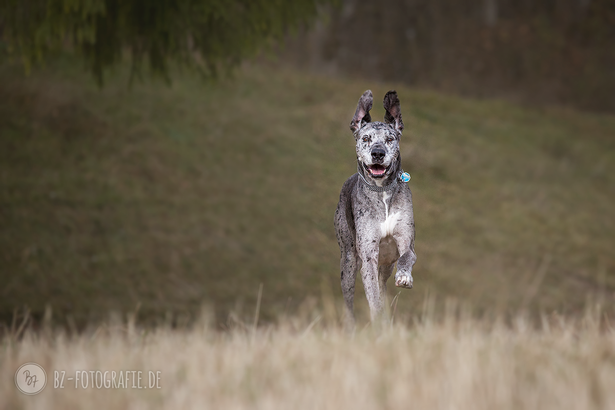hundefotos-isar-muenchen-november-019