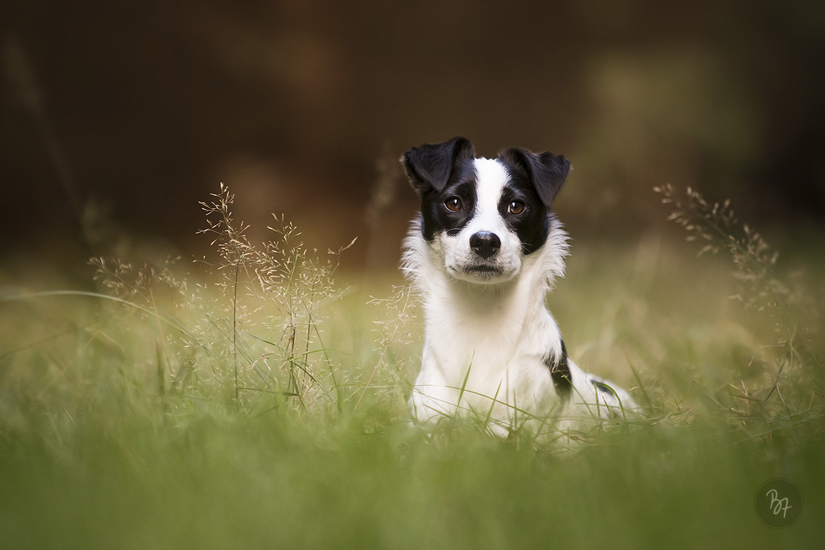 portraitshooting-hund-wald-02
