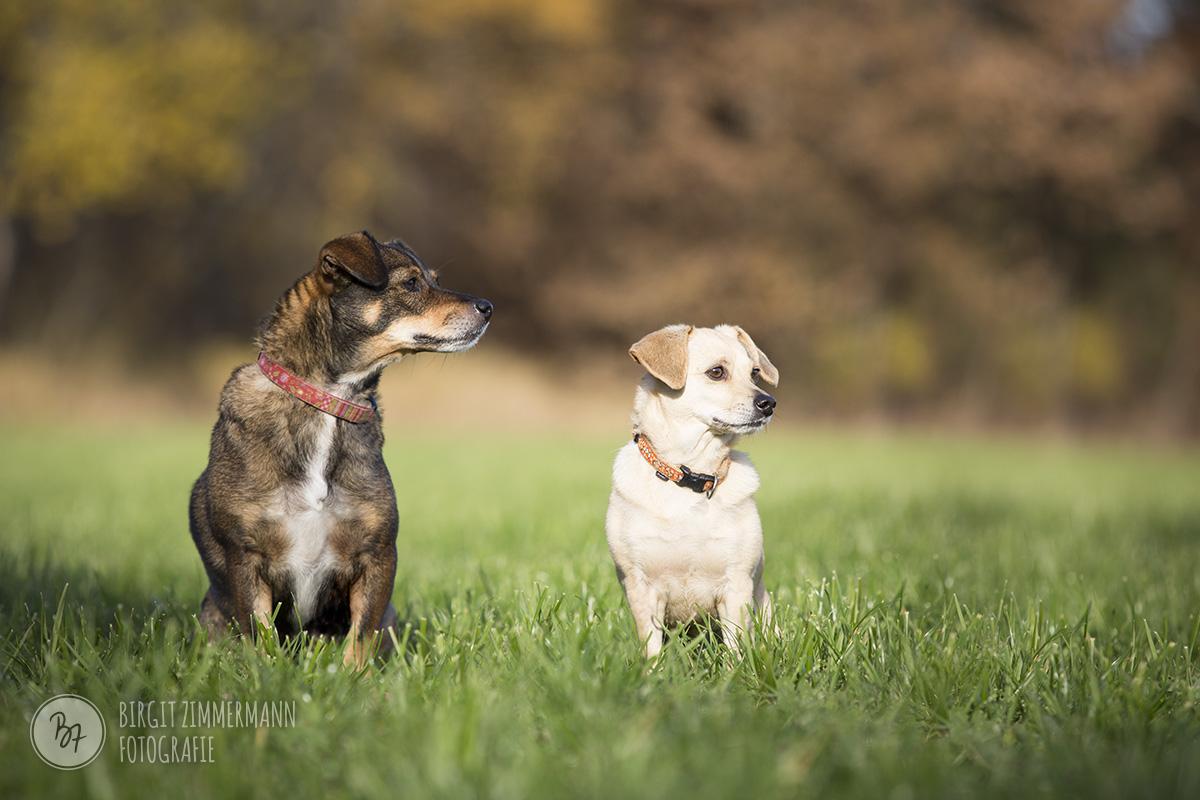 vermittlung-hund-tini-laika-02