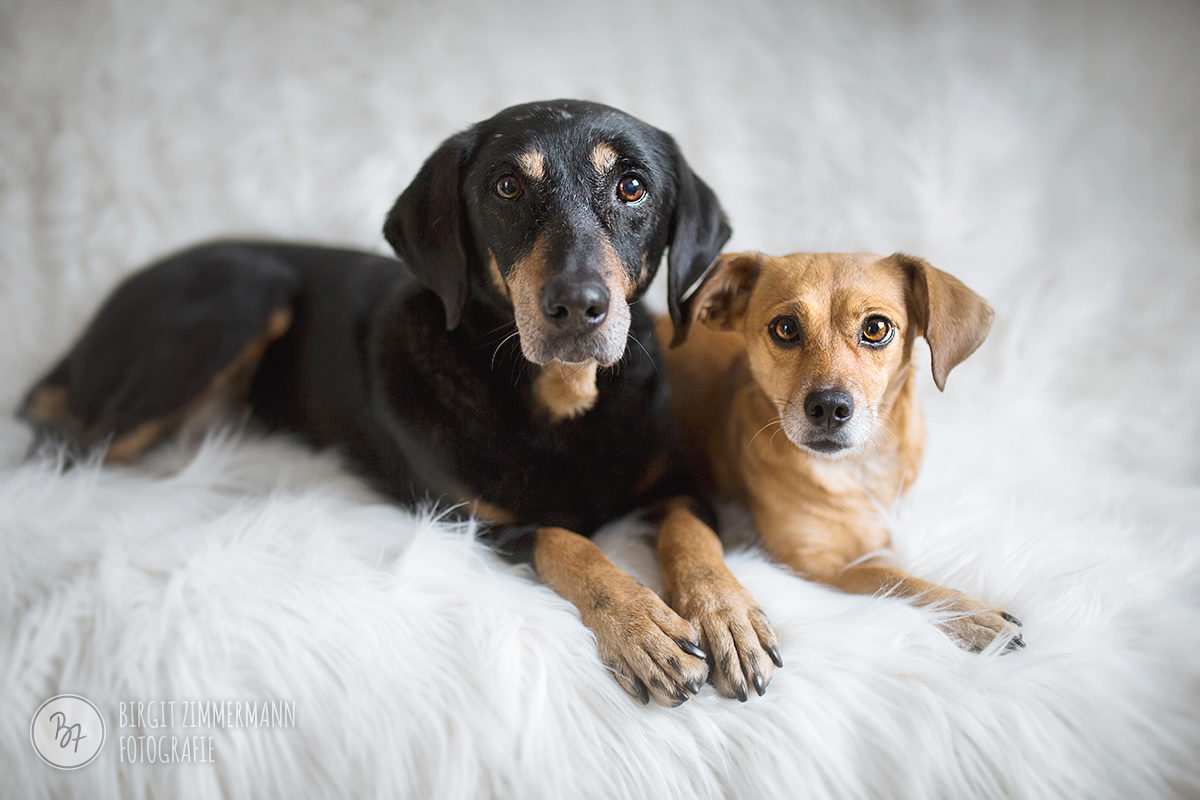homeshooting-hunde-muenchen-002