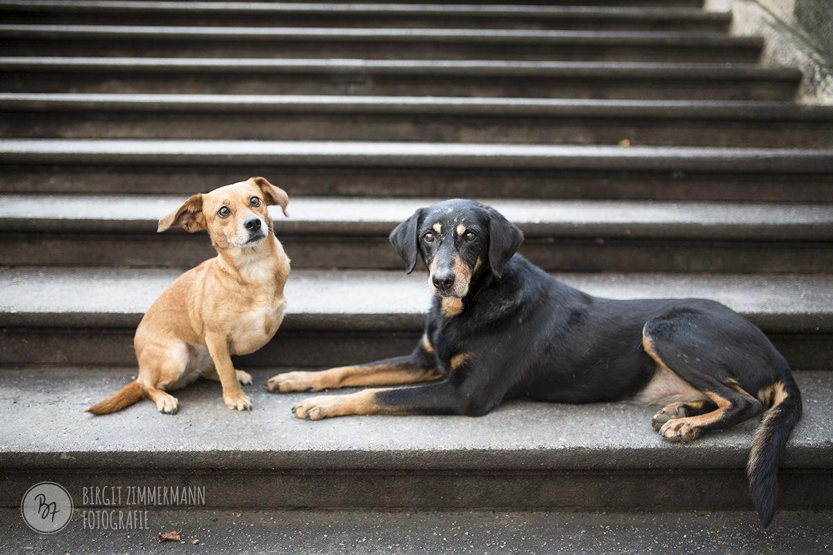 homeshooting-hunde-muenchen-015