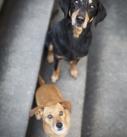 Hundefotografie in München:  Zwei Hunde auf Treppe