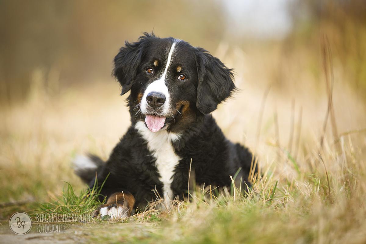 hundefotos-isar-muenchen-november-002