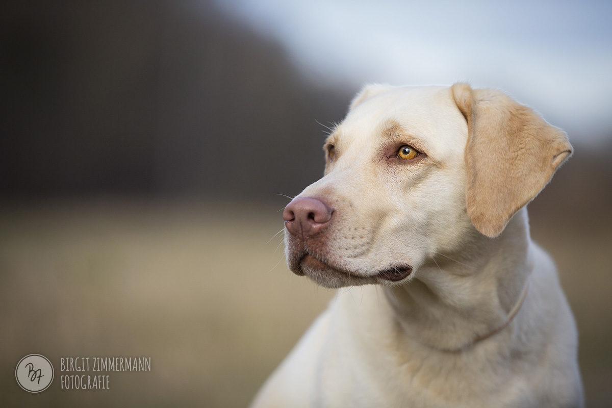 hundefotos-isar-muenchen-november-004