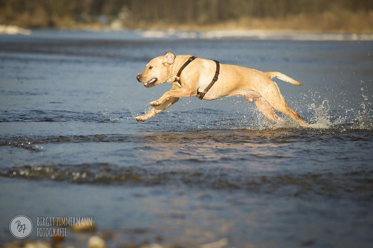 hundefotos-isar-muenchen-november-006