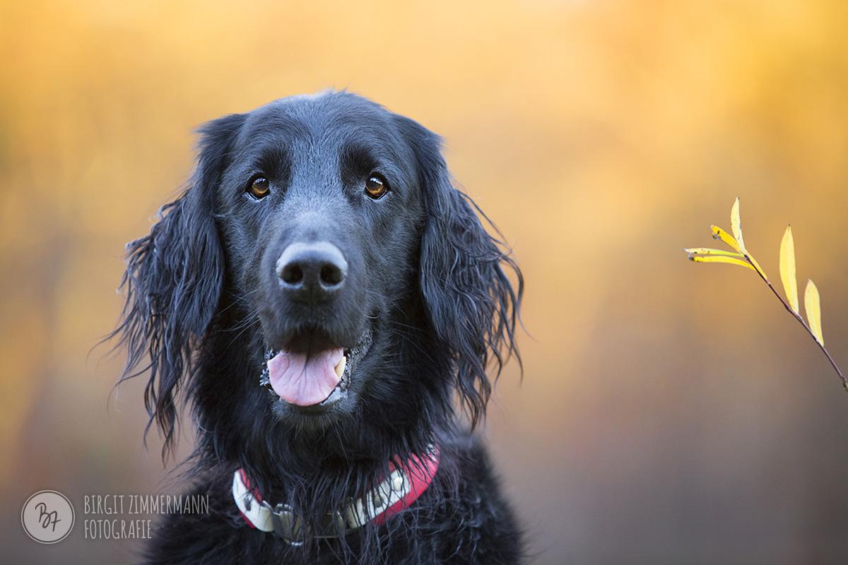 hundefotos-isar-muenchen-november-007