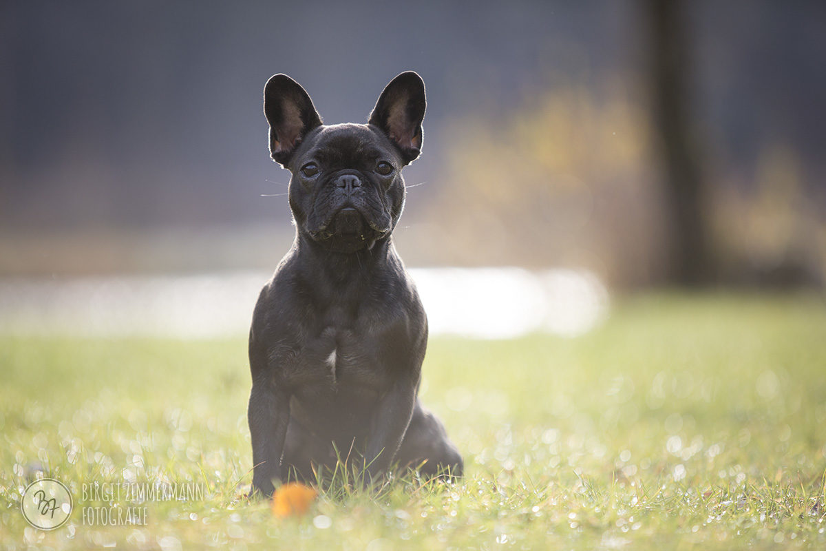 hundefotos-isar-muenchen-november-008