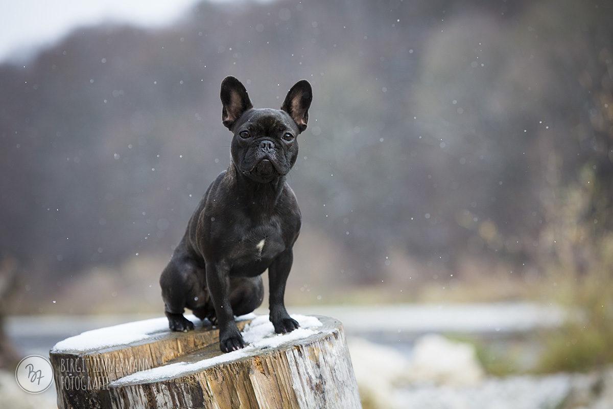 hundefotos-isar-muenchen-november-009