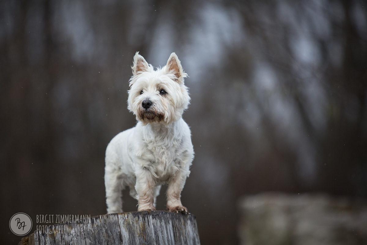 hundefotos-isar-muenchen-november-010