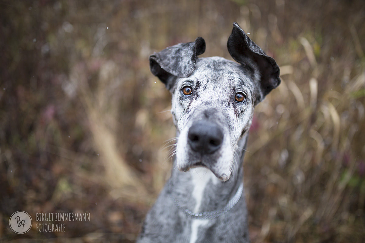 hundefotos-isar-muenchen-november-011