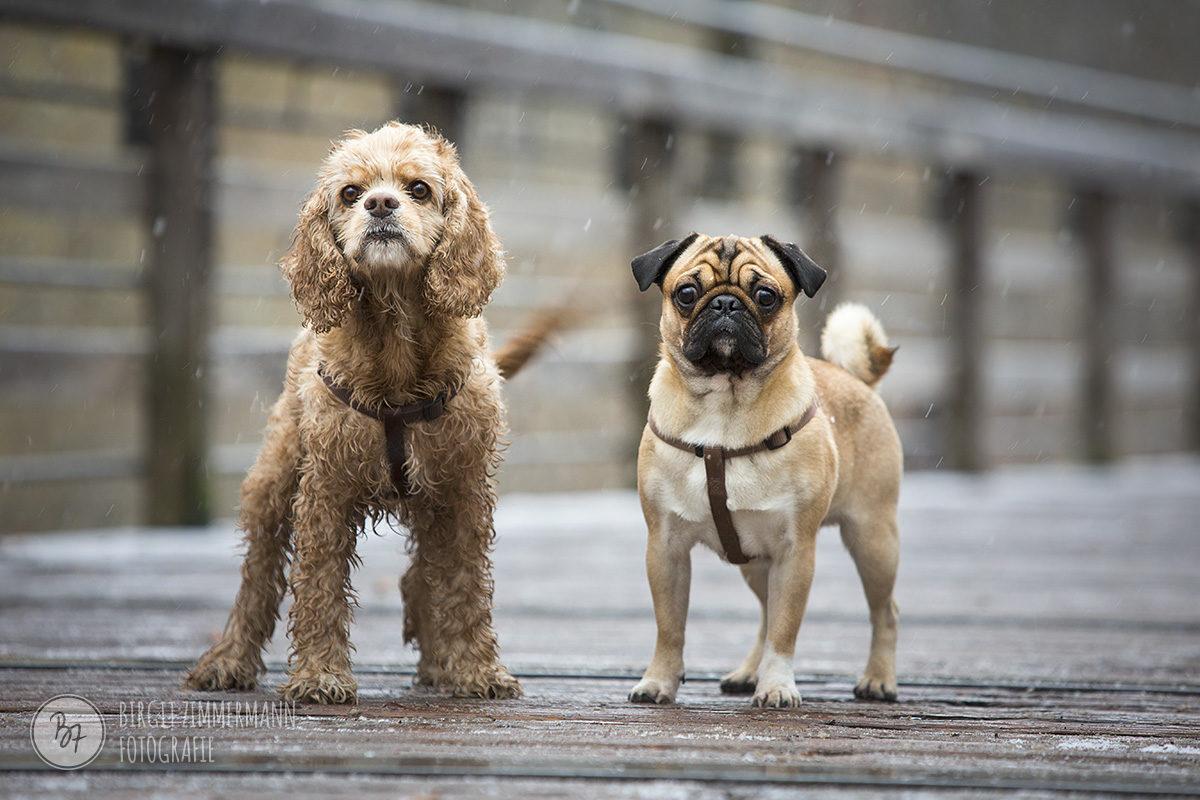 hundefotos-isar-muenchen-november-015