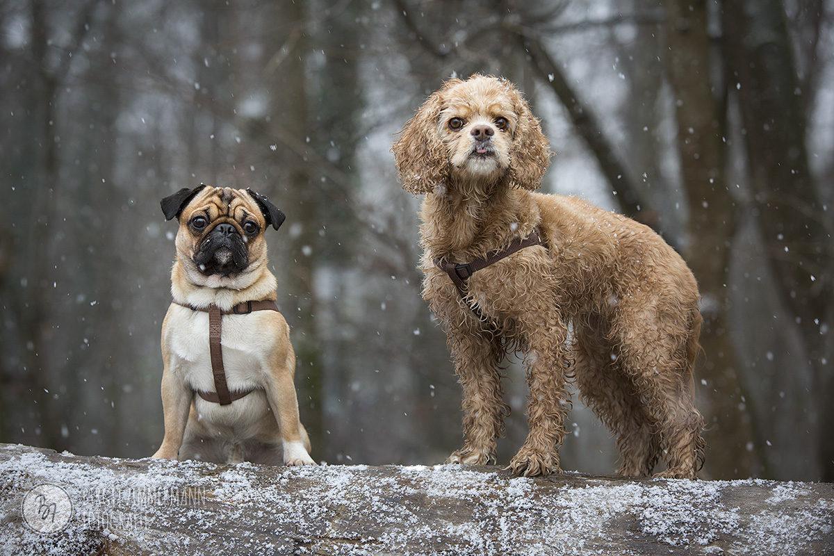 hundefotos-isar-muenchen-november-016