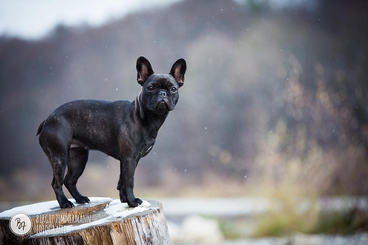 Mini Fotosession mit Hund in München